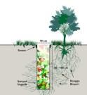 cara membuat lubang resapan biopori dan cara memanfaatkan air hujan