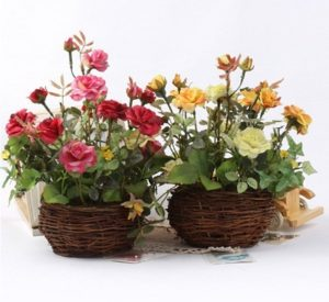 cara menanam bunga mawar dan perawatannya