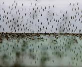 Penyebab banyak nyamuk di rumah karena ada sarangnya