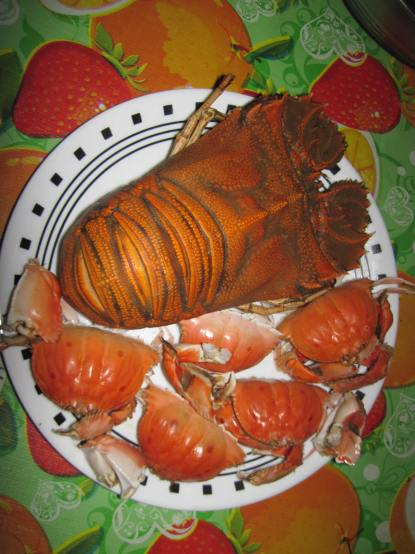 Lobster cousin?
