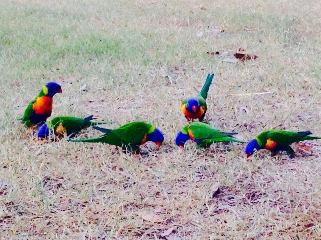 Don't miss the beautiful birdlife!