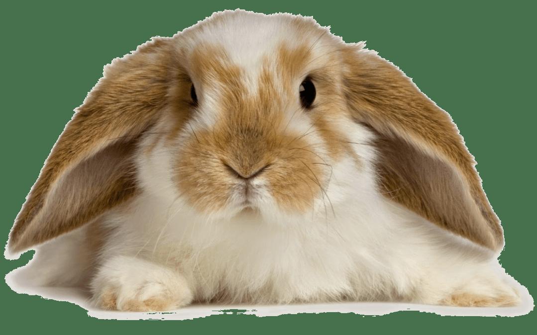 Small Animal Veterinary