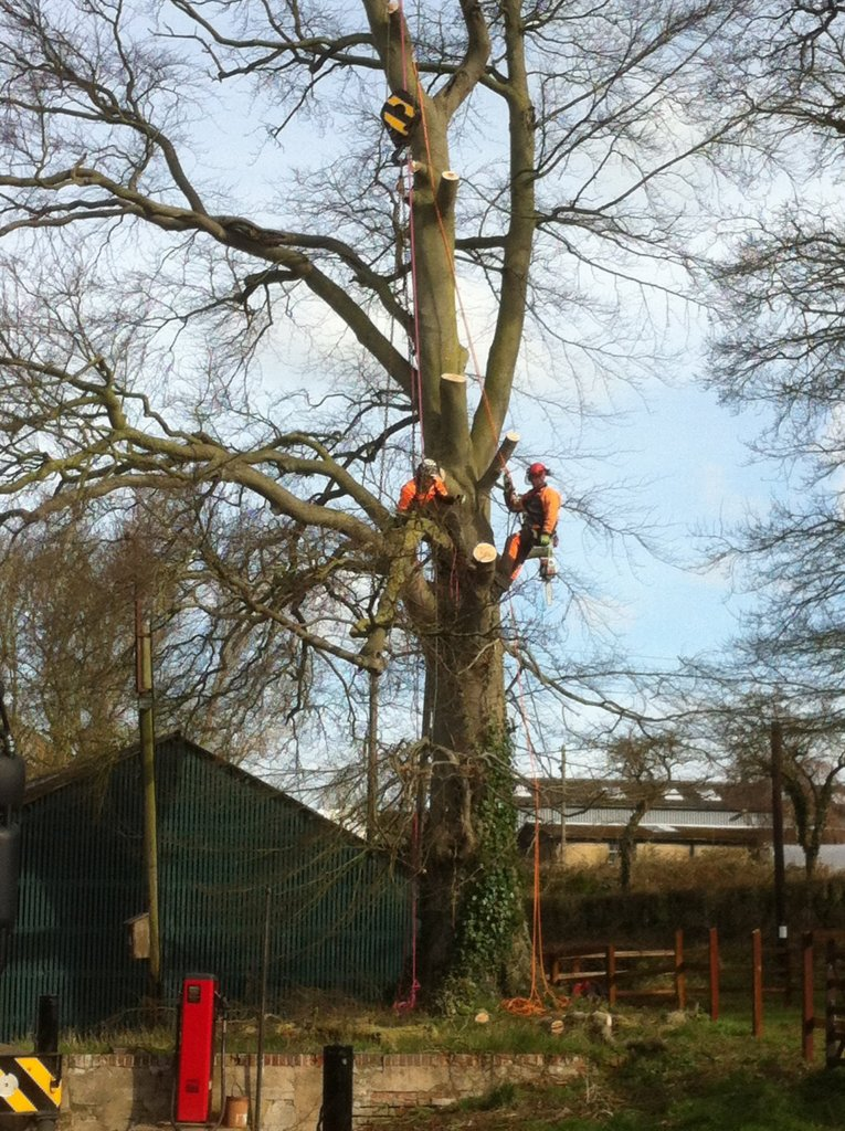Tree surgery services2