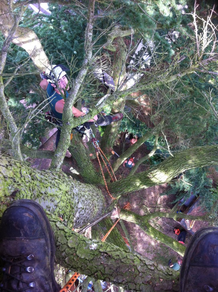 Tree surgery services4