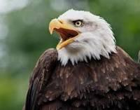 L'àguila simbolitzaria els sentits superiors i l'intel·lecte.