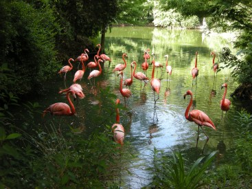 Yes, they're real flamingoes.