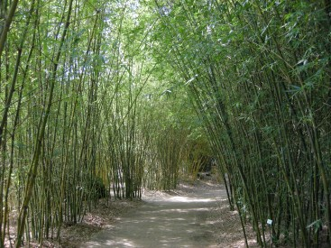 Cool in the shade of bamboo...imagine the sound of a breeze here.