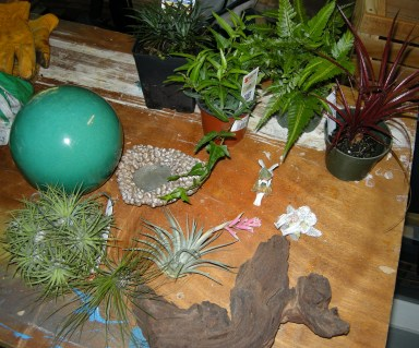 Design elements: ceramic ball, pond, dwarf Mondo grass, needlepoint ivy, pteris fern, various bromeliads, Mopani root, and fairies.