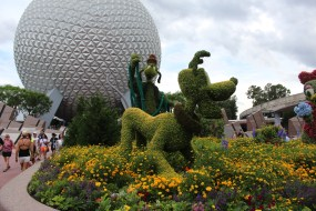Pluto and Goofy in the marigolds and African Daisies.