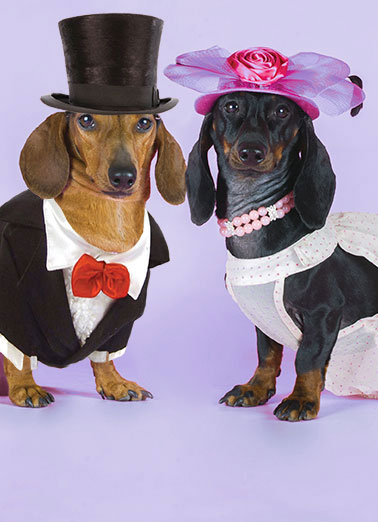 Dachshund Cards Funny Cards Free Postage Included