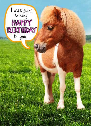 Birthday Cards Funny Animals Cards Free Postage Included
