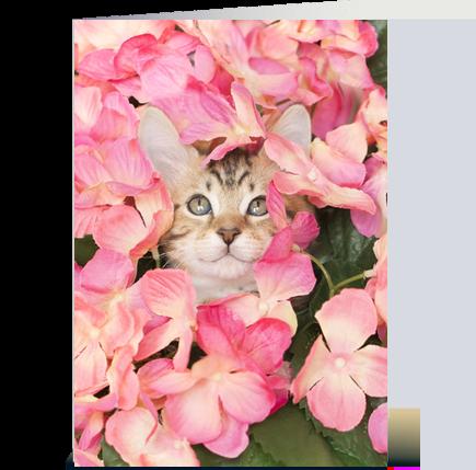 Kitten Peeking from Pink Blossoms