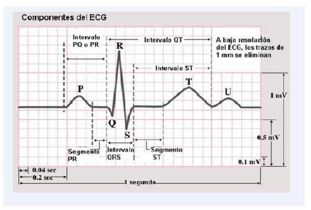 Intervalos Electrocardiograma