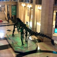 Dippy the Diplodocus – the UK's most famous dinosaur – has arrived at National Museum Cardiff
