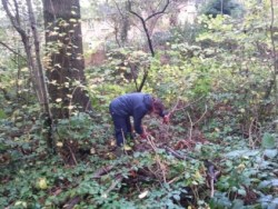 Coppicing in Discovery Wood.