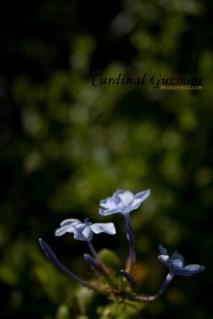 botanisk_8419