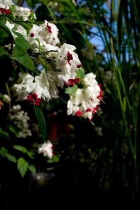 botanisk_8430