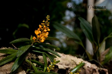 botanisk_8443