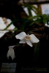 botanisk_8460