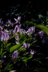 botanisk_8466