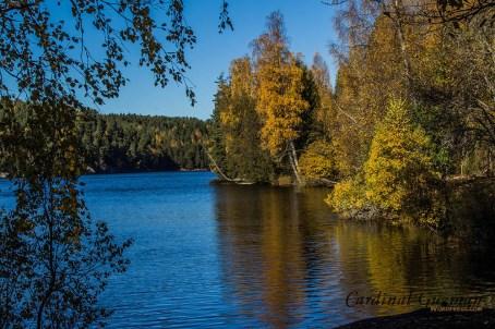 autumn_5664