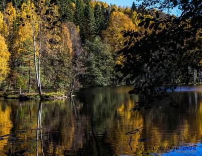 autumn_5737
