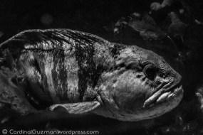 aquarium_1141