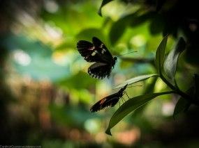 Butterfly porn, botanical Garden, Tøyen.
