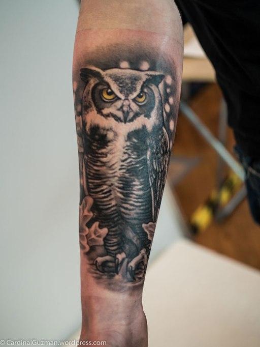 Owl by Jarosław