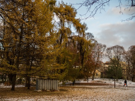 The Royal Palace park.
