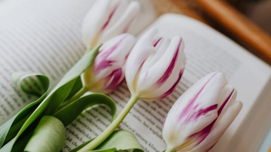 fragrant pink and white tulips placed on the page of a published book