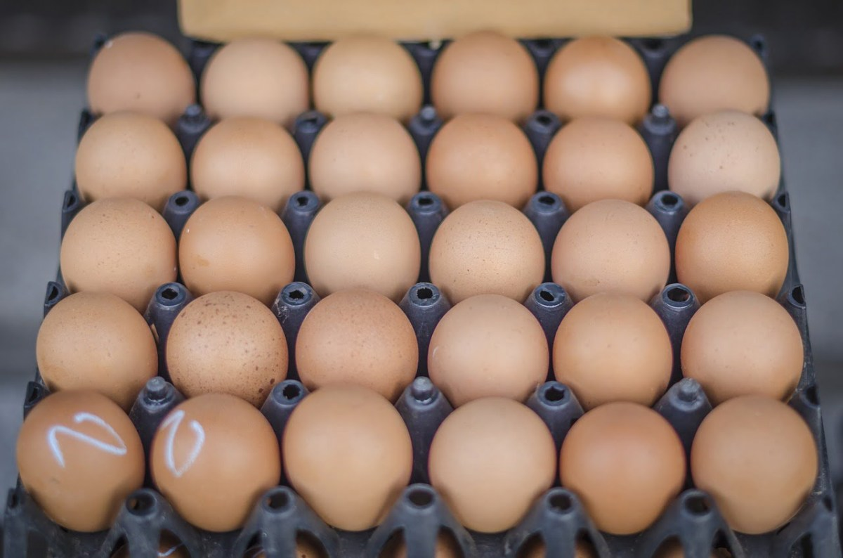 Dieta: café da manhã com alimentos ricos em proteínas pode ajudar a perder peso