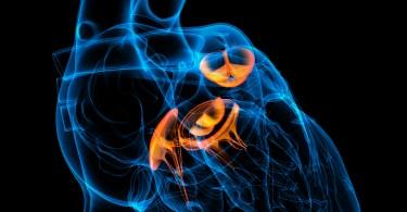 3d render Heart valve