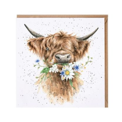 'Daisy Coo' Highland Cow card