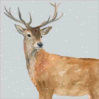 Deer in the Snow Christmas Cards