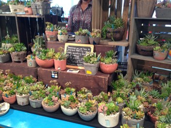 Living succulents from RtCreations