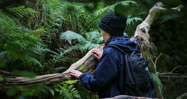 Forest bathing in wicklow   improves your brain health