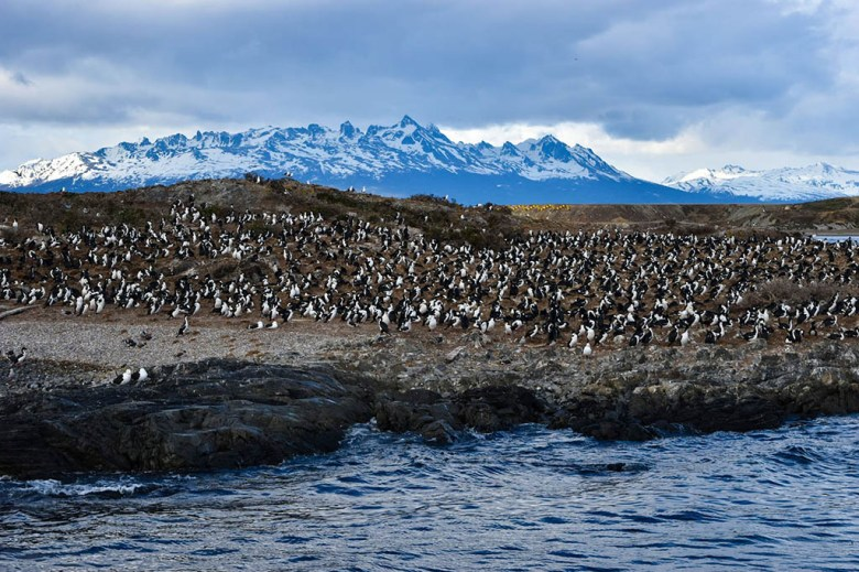 From Ushuaia you can take cruise tours to see penguins and sea lions in the Beagle Channel