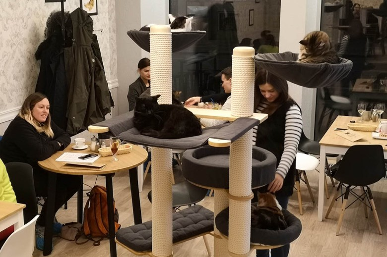 At Cat Café you can have a cuddle with the house pets while enjoying coffee and cake