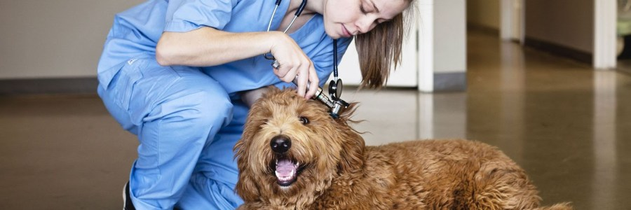 Education Requirements for a Veterinarian