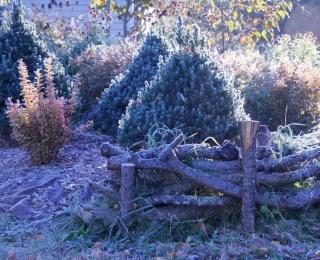 Lehtikuusien oksista tehty cottage garden aita