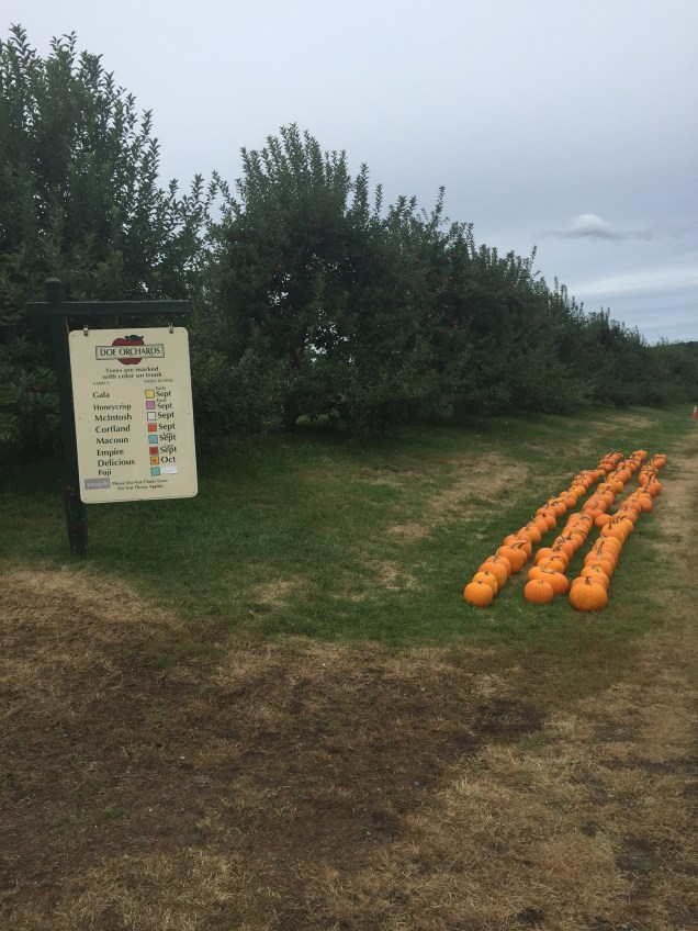 Color coded key for all the apple varieties & pumpkins :)