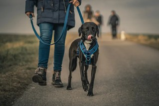 Top 10 Best Leather Dog Leashes in USA 2021