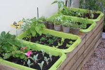 veggies-in-containers