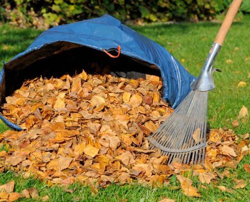 Gardening Rubbish Cleanup