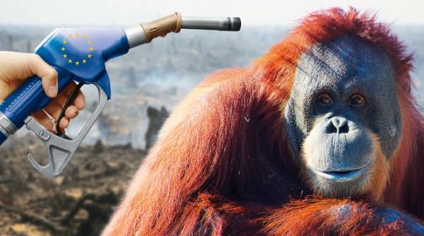 Sauver le climat par la déforestation ? Non merci !!!