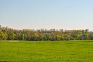 Back Roads Pasture 1