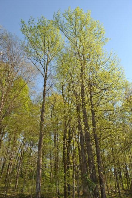 Back Roads Woods 2