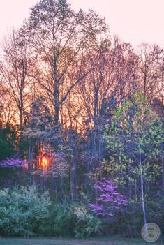 Sunrise Through the Trees 2 WM