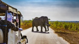 5 Reasons to Visit South Africa